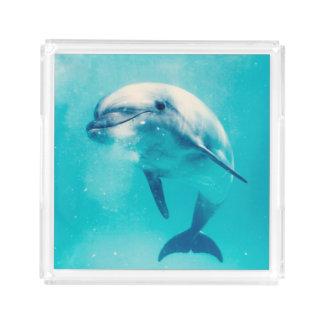 Bottlenosed Dolphin Underwater Acrylic Tray