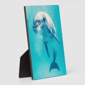 Bottlenosed Dolphin Underwater Photo Plaques