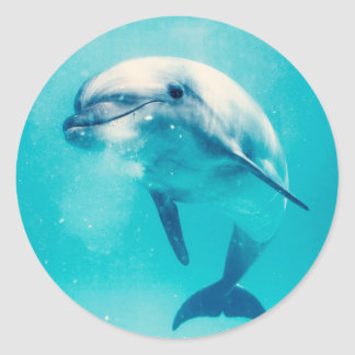 Bottlenosed Dolphin Underwater Round Sticker