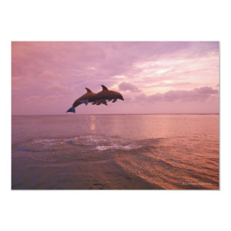 Bottlenosed Dolphins Jumping at Sunset Card