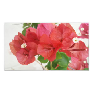 Bougainvilla Flowers Wall Art Decor