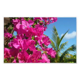 Bougainvillea and Palm Tree Tropical Nature Scene Photo Print