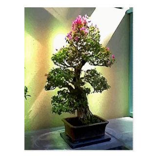 Bougainvillea Bonsai Tree Postcard