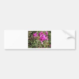 Bougainvillea flowers bumper sticker