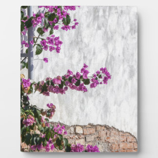 bougainvillea on wall as texture plaque