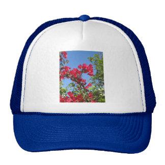 Bougainvillea Products Cap