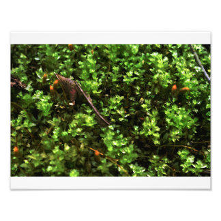 Bouncy Grass Photo Print