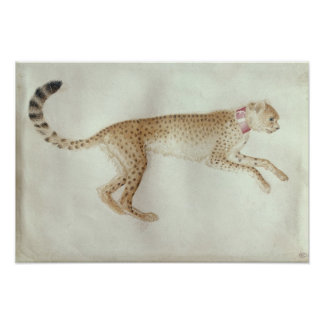 Bounding cheetah with a red collar poster