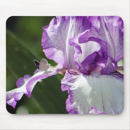 Bountiful Butterfly Iris Photography Mouse Pad