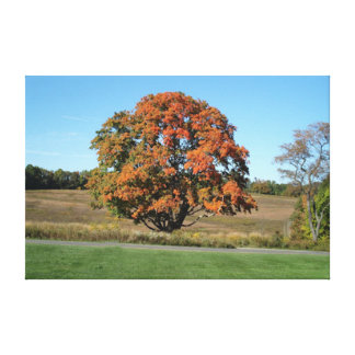 Bountiful Fall Tree Picture Gallery Wrapped Canvas