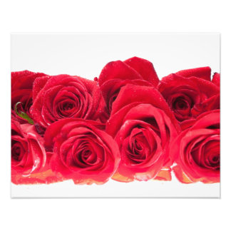 Bouquet of Bright Pink Roses Photo Print