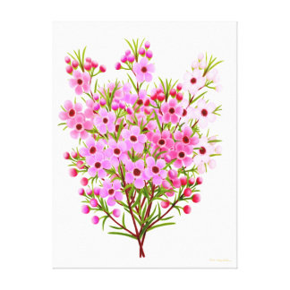 Bouquet of Pink Waxflowers Wrapped Canvas Gallery Wrap Canvas