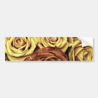Bouquet of Red and White Roses in Full Bloom Bumper Sticker