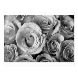Bouquet of Roses with Water Drops in Black and Whi Postcard
