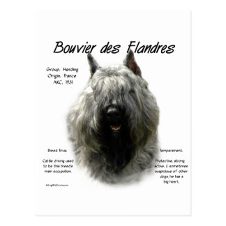 Bouvier des Flandres History Design Postcard