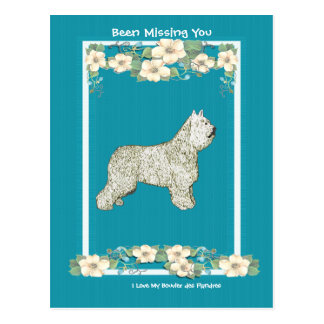 Bouvier on Turquoise Floral - Missing You Postcard