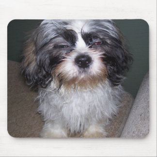 Bowie the Fuzzy Shih Tzu Puppy Mousepad