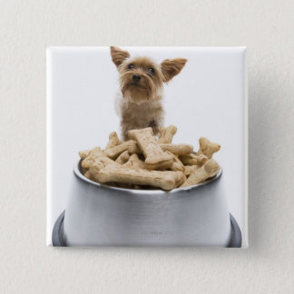 Bowl of dog treats by Yorkshire Terrier 15 Cm Square Badge