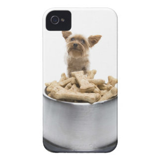 Bowl of dog treats by Yorkshire Terrier iPhone 4 Case-Mate Cases