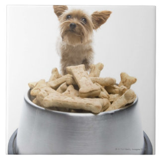 Bowl of dog treats by Yorkshire Terrier Tile