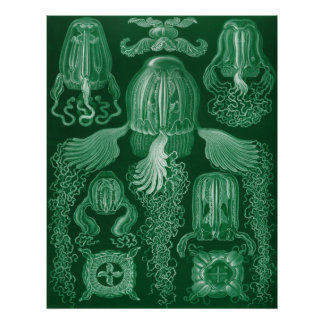 Box Jellyfish Poster
