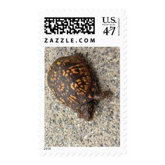 Box Turtle Postage