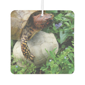 Box Turtle Protecting Turtle Shell