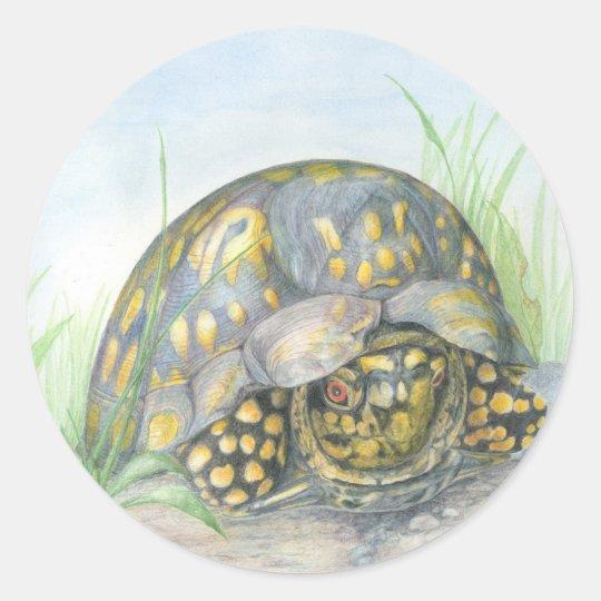 Box Turtle Round Sticker