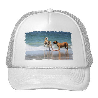Boxer and Pal - Was that a Dolphin? Cap