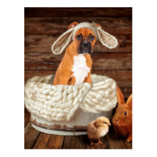 Boxer Bunny Postcard