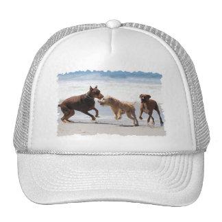 Boxer Doberman - Play Date at the Beach Trucker Hat