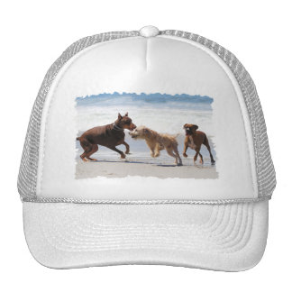Boxer Doberman - Play Date at the Beach Hat