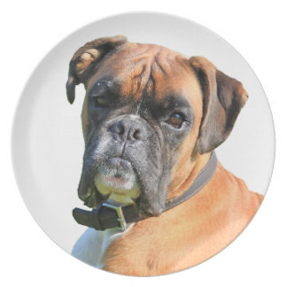 Boxer dog beautiful photo portrait plate