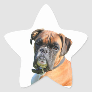 Boxer dog beautiful photo portrait star stickers