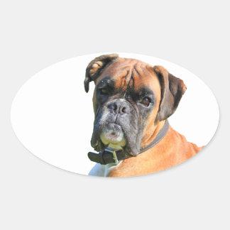 Boxer dog beautiful photo portrait oval sticker