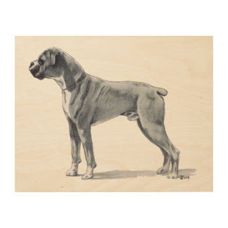 Boxer Dog Drawing Wood Canvas