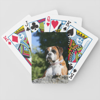 Boxer Dog Laying on a Rock Bicycle Playing Cards