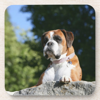 Boxer Dog Laying on a Rock Coaster