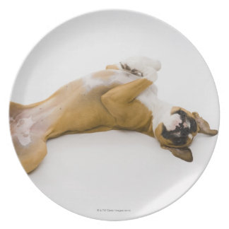 Boxer dog laying on her back on the floor plate