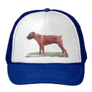 Boxer Dog, Male, Hat