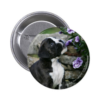 Boxer Dog Panting 6 Cm Round Badge