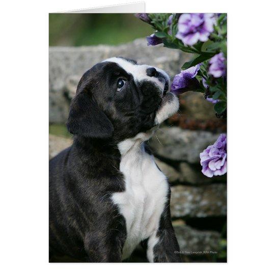 Boxer Dog Panting Card