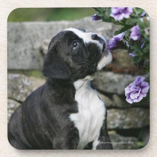 Boxer Dog Panting Drink Coasters