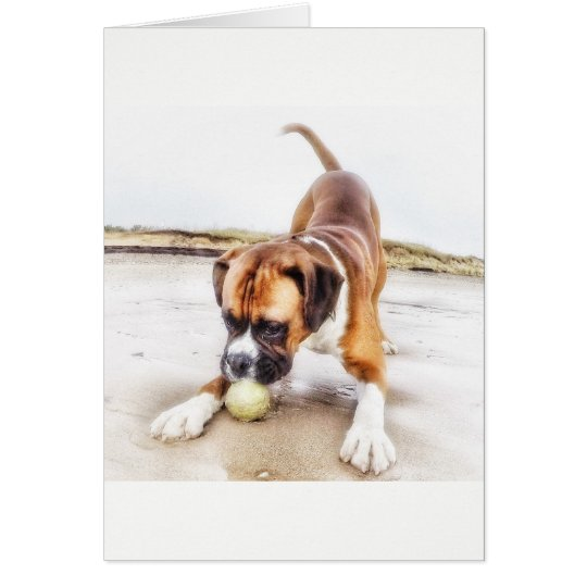 Boxer dog playing at the beach blank greeting