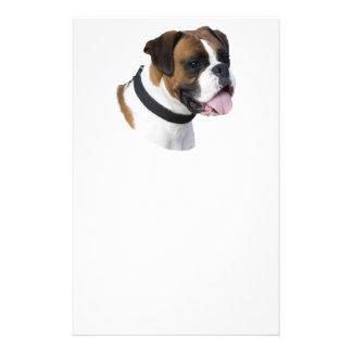 Boxer dog portrait photo flyer