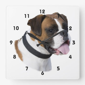 Boxer dog portrait photo square wall clock