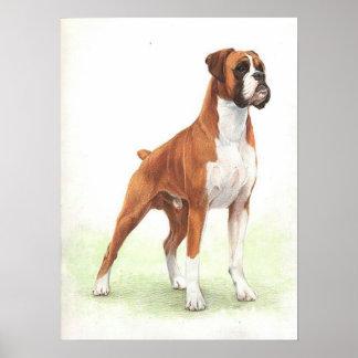 Boxer Dog Portrait Poster Print