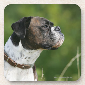 Boxer Dog Profile Coaster