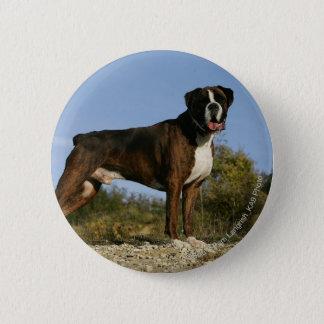 Boxer Dog Show Stance 6 Cm Round Badge