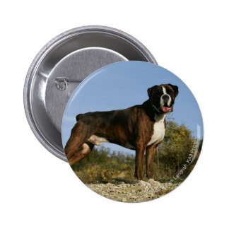 Boxer Dog Show Stance 6 Cm Round Badge